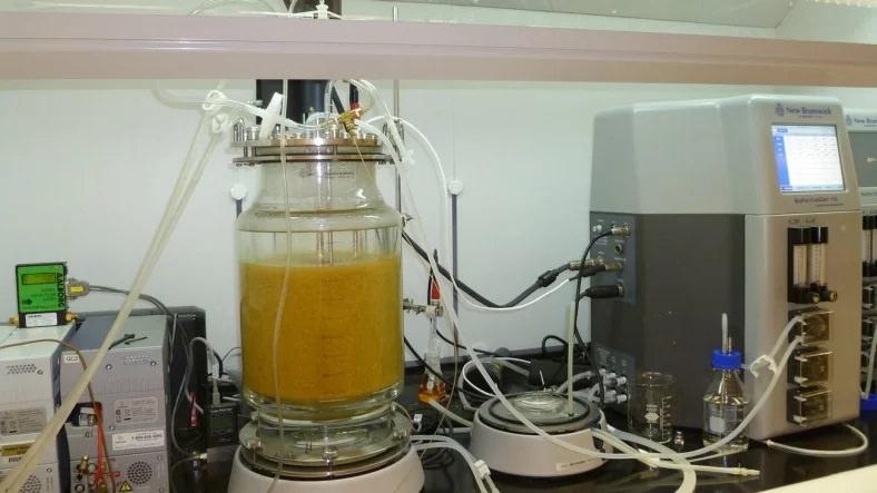Gıda Atıklarını Hidrojene Çeviren Yeni Bir Yöntem Keşfetildi
