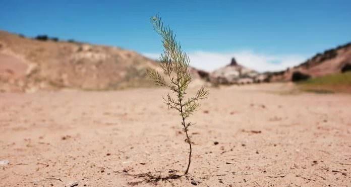 Yeni Araştırmalar, İklim Değişikliğine Kurak Alanlarla Çözüm Sunuyor