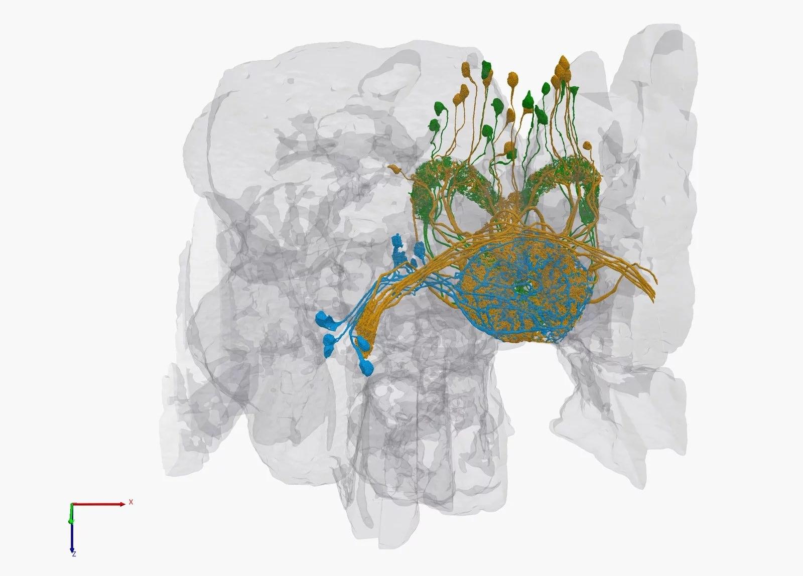 25 bin nöron, 20 milyon bağlantı