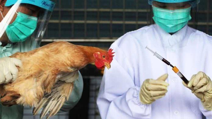Çin, Vietnam ve Suudi Arabistan'da Kuş Gribi Salgını