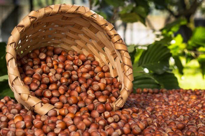 TMO 6 Nisanda 20 bin ton kabuklu fındığı satışa sunuyor