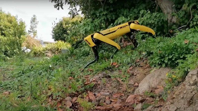 Robot Köpek Spot, Bu Kez de Çobanlığa Soyundu (Video)
