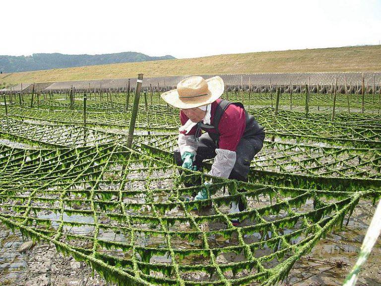 Deniz yosunu üreten şirketlerin değeri 6 milyar dolara ulaştı