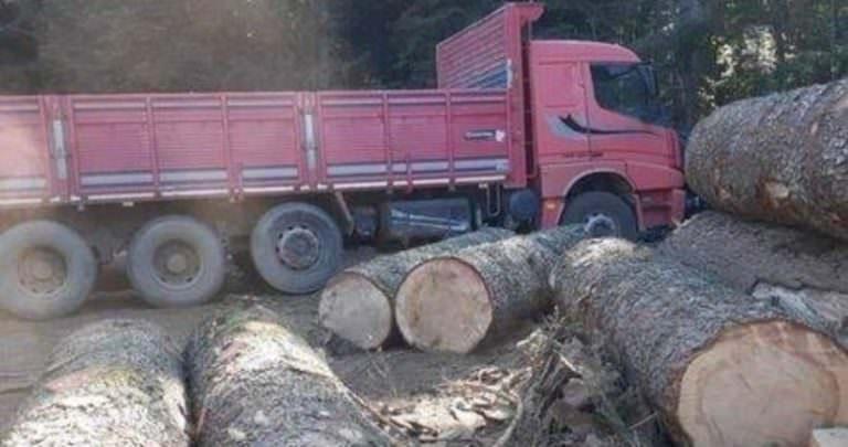 Fethiye'de şaşırtan skandal! Orman çetesinin lideri bakın kim çıktı?