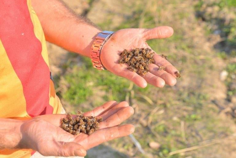 Uyarı: Bahar aylarında arı ölümleri artacak