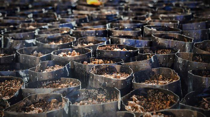 ÇAYKUR'da 20 ton çay imha edildi, 122 bin ton küflenmek üzere