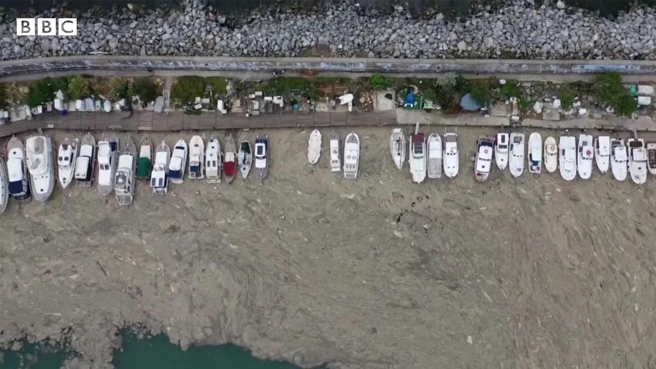BBC, Müsilajın Ele Geçirdiği Marmara'nın Dibini Görüntüledi [Video]